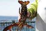 "Orland lobsterman gets fine, jail time for ""extreme"" violations"