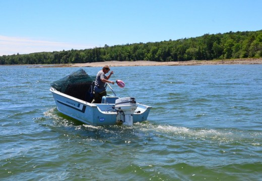 Surry oyster farm draws appeal to law court
