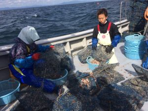 pearl-nets-on-boat