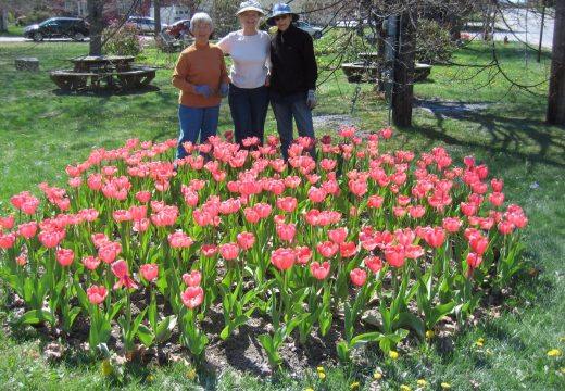 Ellsworth Garden Club's Pink Tulip Festival set for May 27