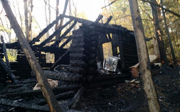 Fire burns down cabin, spreads into woods