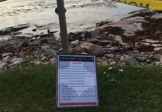 "Dead seals in Winter Harbor part of ""unusual  mortality event"""