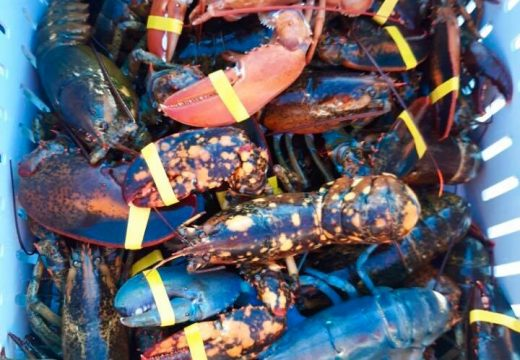 NOAA awards $850,000 for tracking, reporting lobster harvests