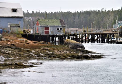 Shellfish lab finds a home in Bunkers Harbor